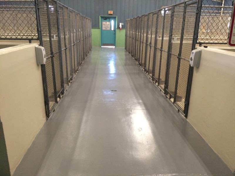 Indoor animal holding pens with chain link gates in a very clean facility